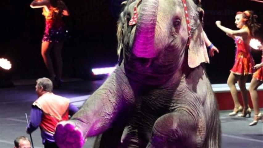 México aprueba ley que prohíbe animales en circos