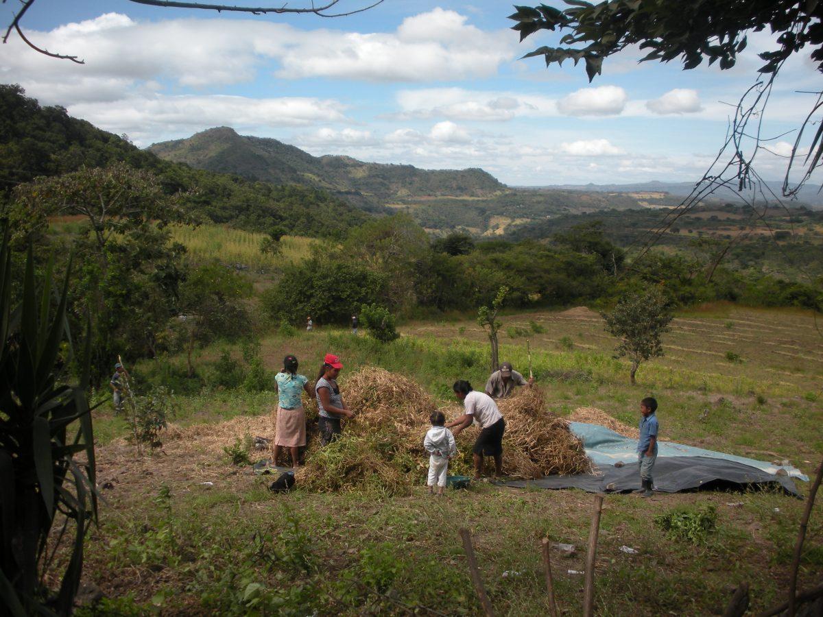 FAO: América Latina avanza en erradicación del hambre
