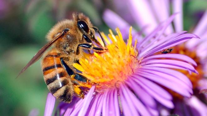 Las cámaras del futuro podrían funcionar como el cerebro de una abeja