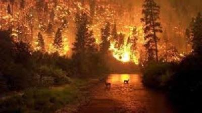 ¿Por qué el incendio en la Amazonía importa menos que Notre Dame?